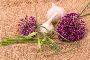 flor-de-alho